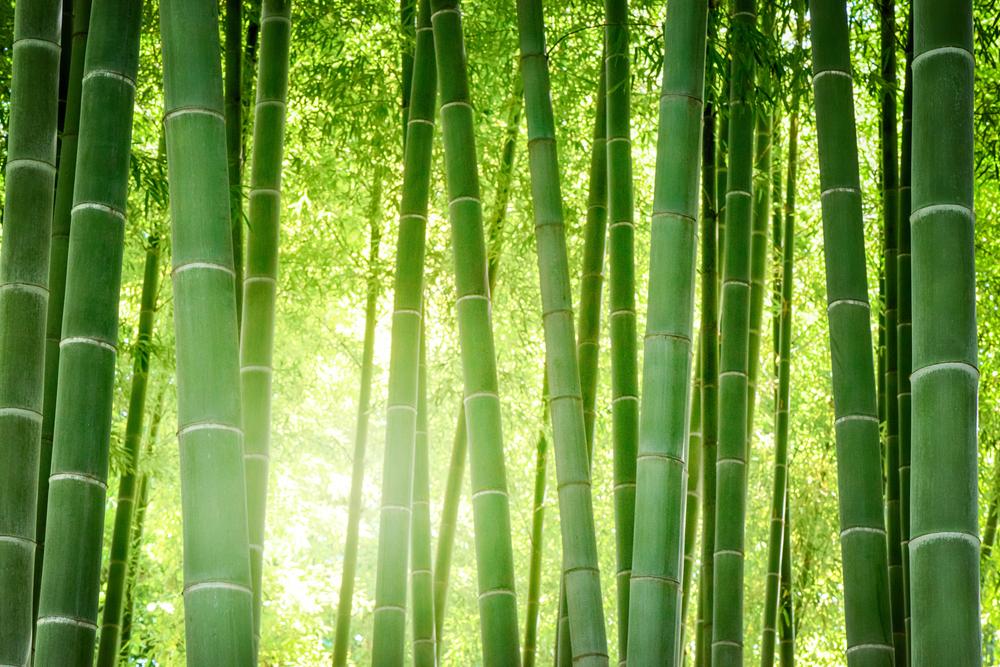 bamboe kunstplant kopen